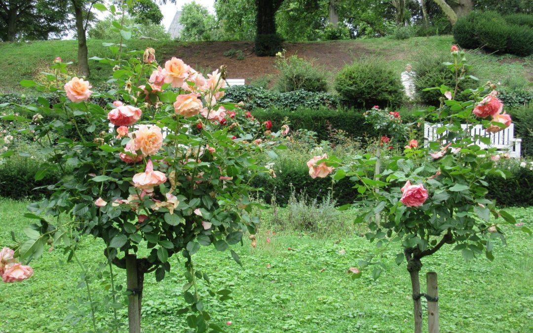 Smalltalk aus dem Rosengarten V