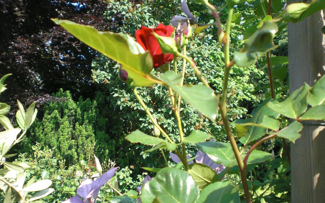 Smalltalk aus dem Rosengarten VII